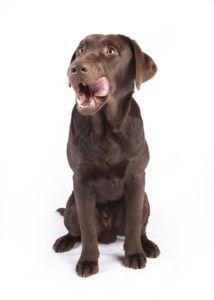 färskfoder hund