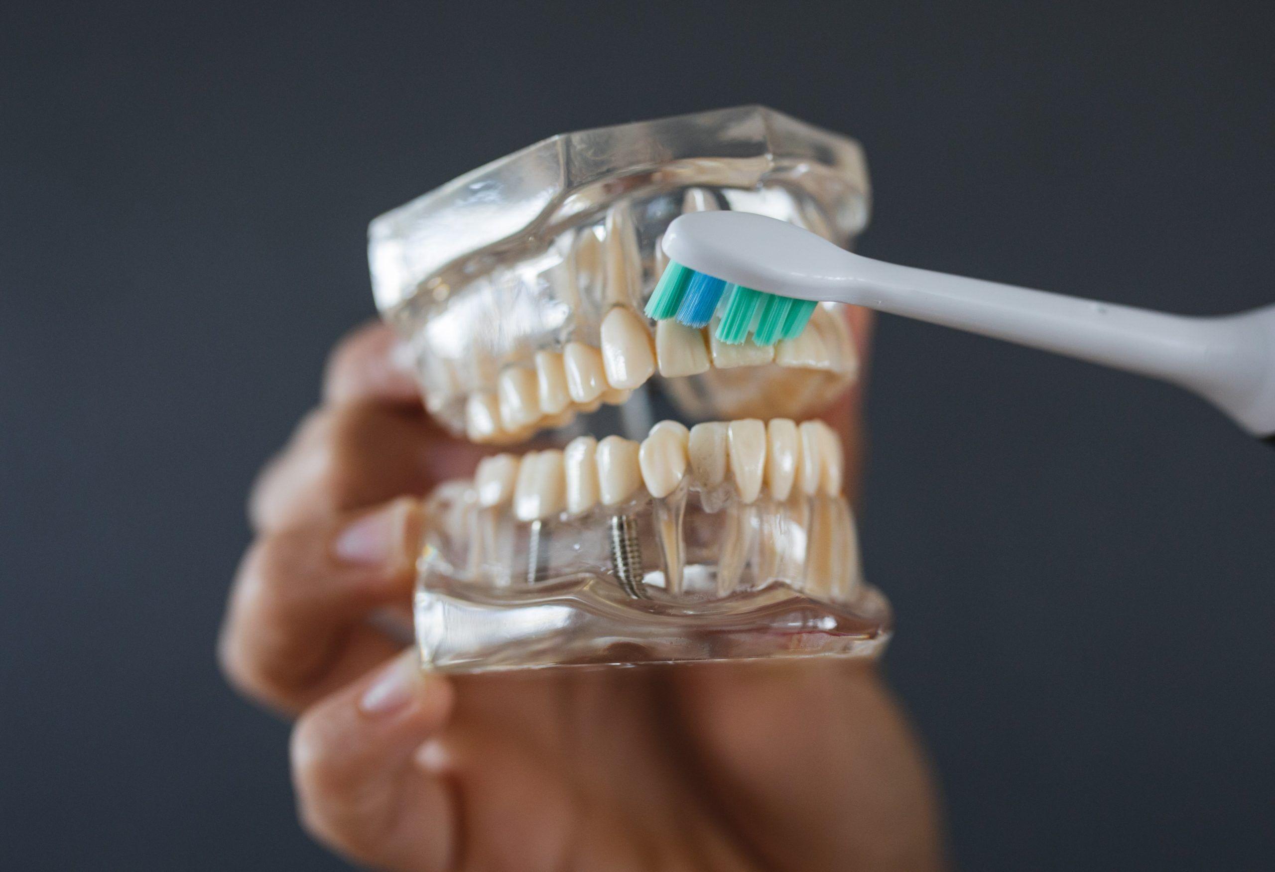 Eltandborste borsta tänderna